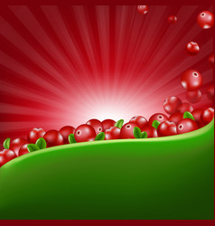 red cranberry border with sunburst vector image