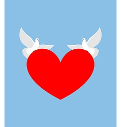 White Dove holds heart Two white bird is symbol of vector image