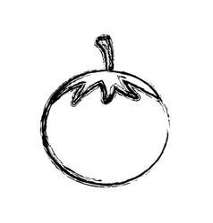 contour vegetable tomato icon vector image vector image