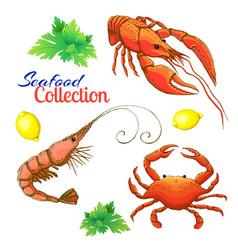 Decorative seafood set realistic sketched prawn vector