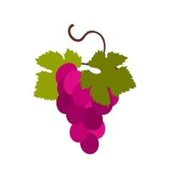 Grapes bunch icon flat style vector image