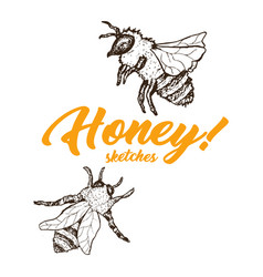 Honey sketch bee honey hand drawn superfood vector