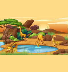 scene with many giraffes pond vector image