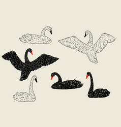 Set black and white swans hand drawn birds vector