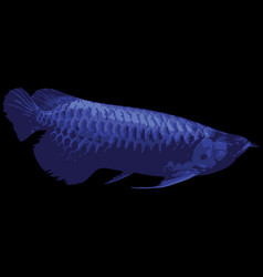 blue fish on black background vector image