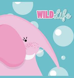 elephant wildlife animal cartoon vector image