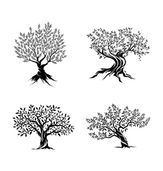 Olive trees silhouette icon set vector image