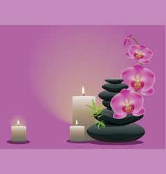 pebbles with orchid vector image