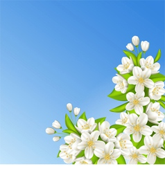 Sakura on the background of blue sky vector image