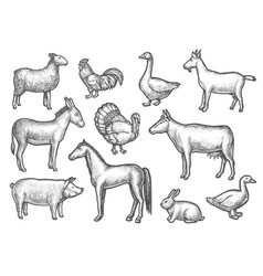 set isolated domestic bird and animal sketch vector image