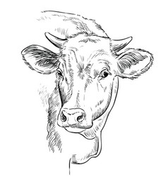 Head beauty cow hand drawing vector