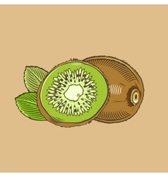 Kiwi in vintage style Colored vector image