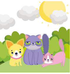 Little puppy and cats sun sky outside pets vector