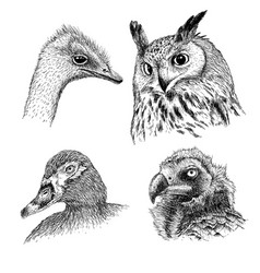 realistic heads wild birds vector image