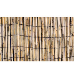 texture of wall of bound bamboo vector image vector image