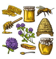 honey set jars of honey bee hive clover vector image