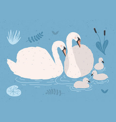 couple of white swans and brood of cygnets vector image