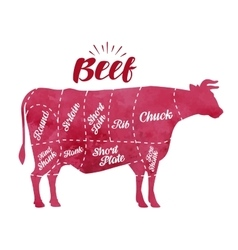 Diagram cutting cow meat Butcher shop bull beef vector image