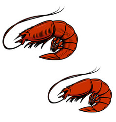 fresh seafood shrimps icon on white background vector image