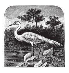 Great egret vintage vector
