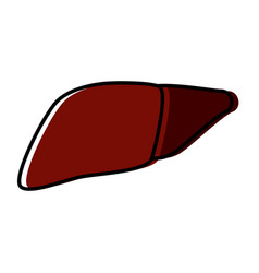 liver human organ vector image