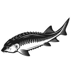sturgeon fish icon isolated on white background vector image