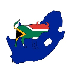 South Africa buffalo vector image vector image