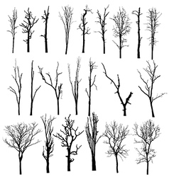 black silhouette of a bare tree vector image