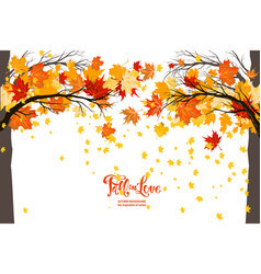 maple fall trees vector image