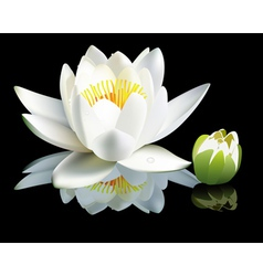 Waterlily flower vector
