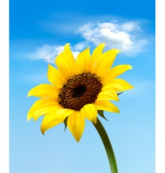 Background with sunflower field over cloudy blue vector image