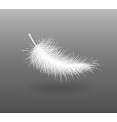 feather falling light small vector image vector image