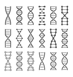Dna spiral icon human genetics code genom model vector