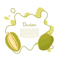 Durian exotic juicy thailand malaysia fruit poster vector