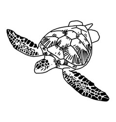 Hand draw sea turtle vector