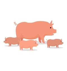 Pigs Flat Design On White vector image