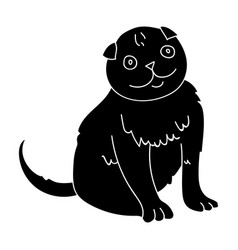 scottish fold icon in black style isolated on vector image