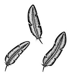 set of feather on white background design element vector image