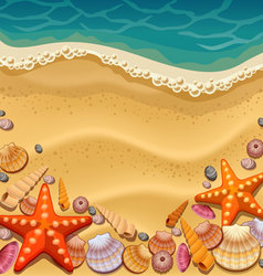 shells on beach vector image