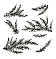 Pine tree branches isolated on white vector