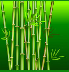 bamboo1 vector image
