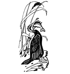 cormorant bird eats fish vector image