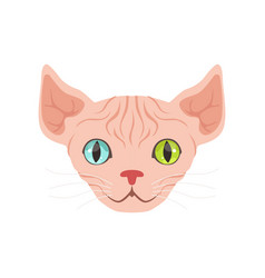 Cute sphinx cat with eyes different colors vector