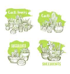 Sketches cactus in pots and succulent plants vector