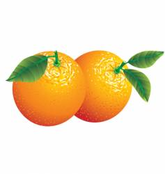 two oranges vector image vector image