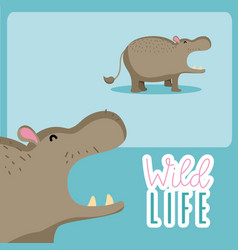 Hippo wildlife animal cartoon vector