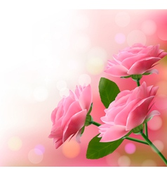 Holiday background with three pink flowers vector image