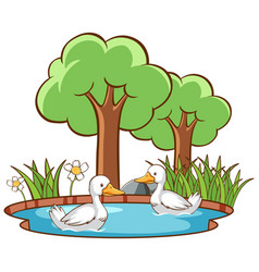 Isolated picture two ducks in pond vector
