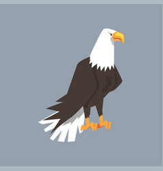 north american bald eagle character symbol of vector image