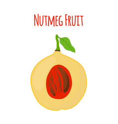 nutmeg fruit food cartoon flat style vector image